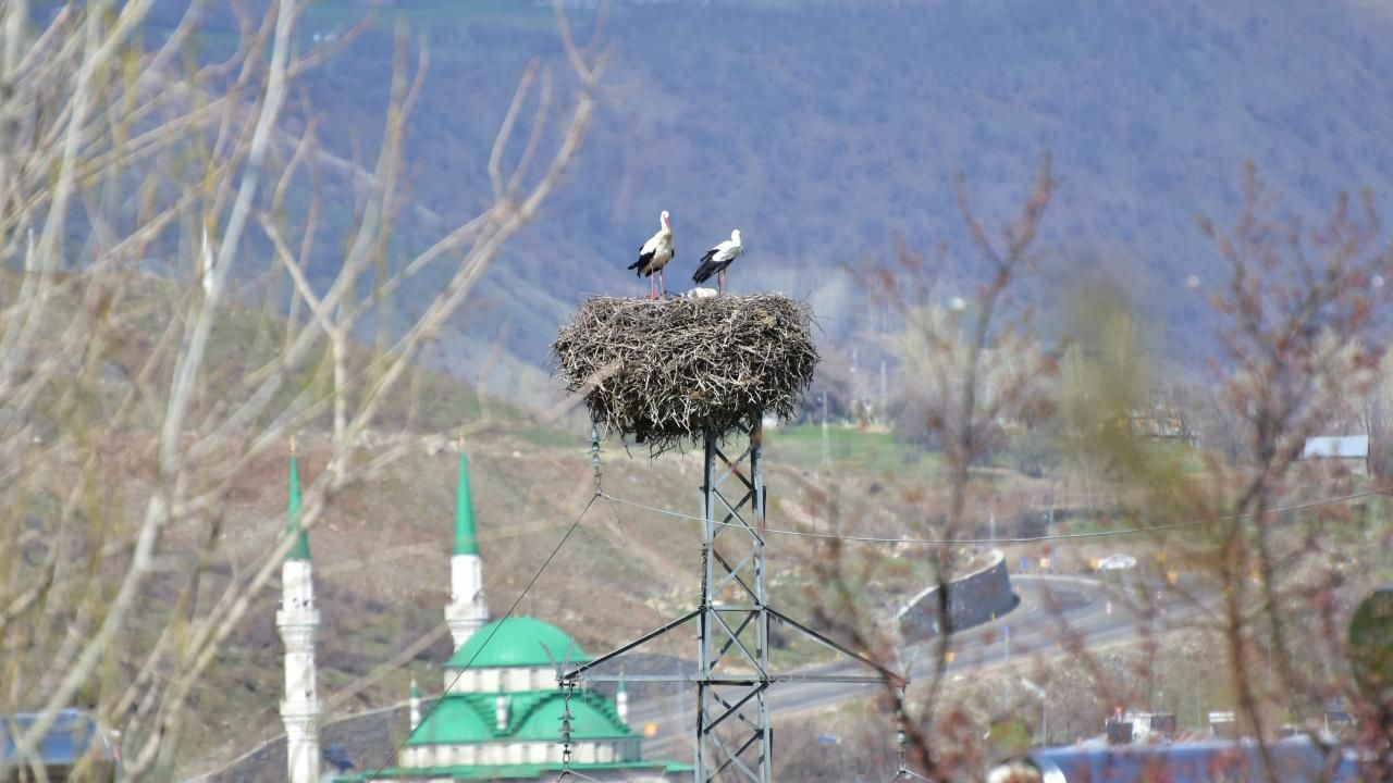 Baharın müjdecisi leylekler Bingöl'e geri dönüyor - Sayfa 3