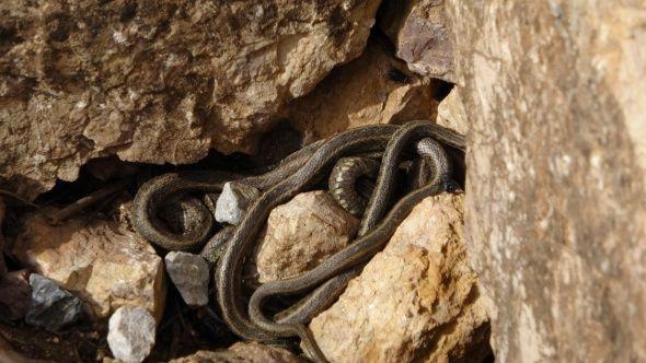 Hakkari'de yılan sürüsü görenleri şaşkına çeviriyor - Sayfa 4