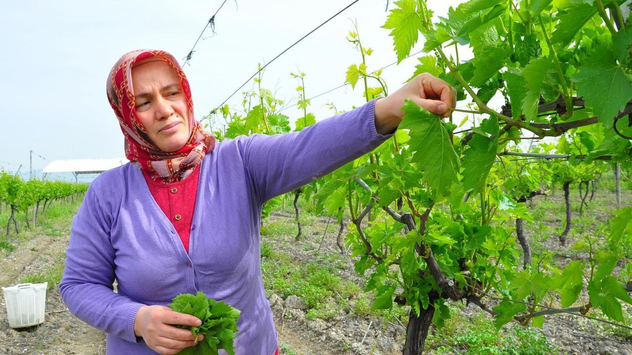Avrupa ve Orta Doğu ülkelerine Manisa yaprağı ihracatı - Sayfa 4