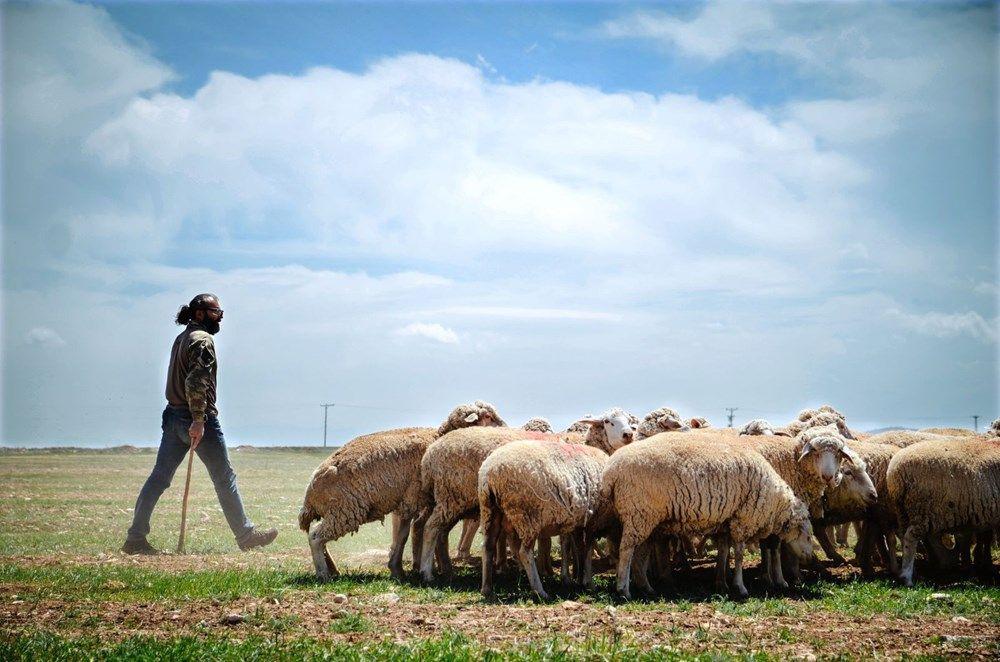 Kariyerlerini bırakıp kurdukları çiftlikte 800 hayvanlı sürünün sahibi oldular - Sayfa 1