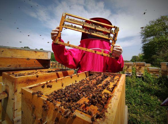 Gram gram sağdığı arı sütünün kilosunu 8 bin liradan satıyor - Sayfa 1