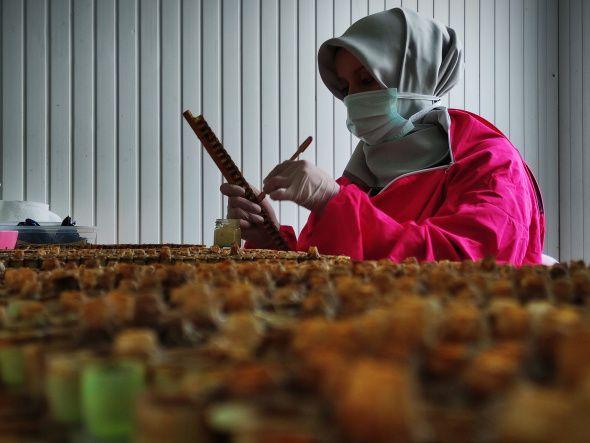 Gram gram sağdığı arı sütünün kilosunu 8 bin liradan satıyor - Sayfa 3
