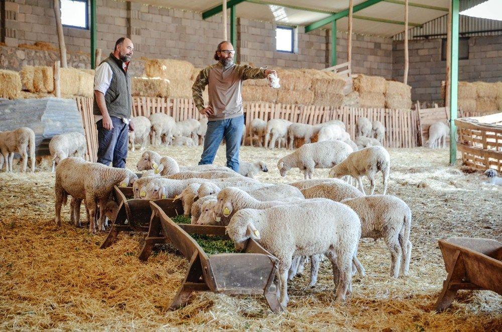 Kariyerlerini bırakıp kurdukları çiftlikte 800 hayvanlı sürünün sahibi oldular - Sayfa 2