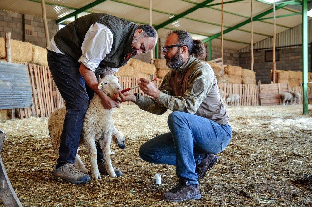 Kariyerlerini bırakıp kurdukları çiftlikte 800 hayvanlı sürünün sahibi oldular - Sayfa 3