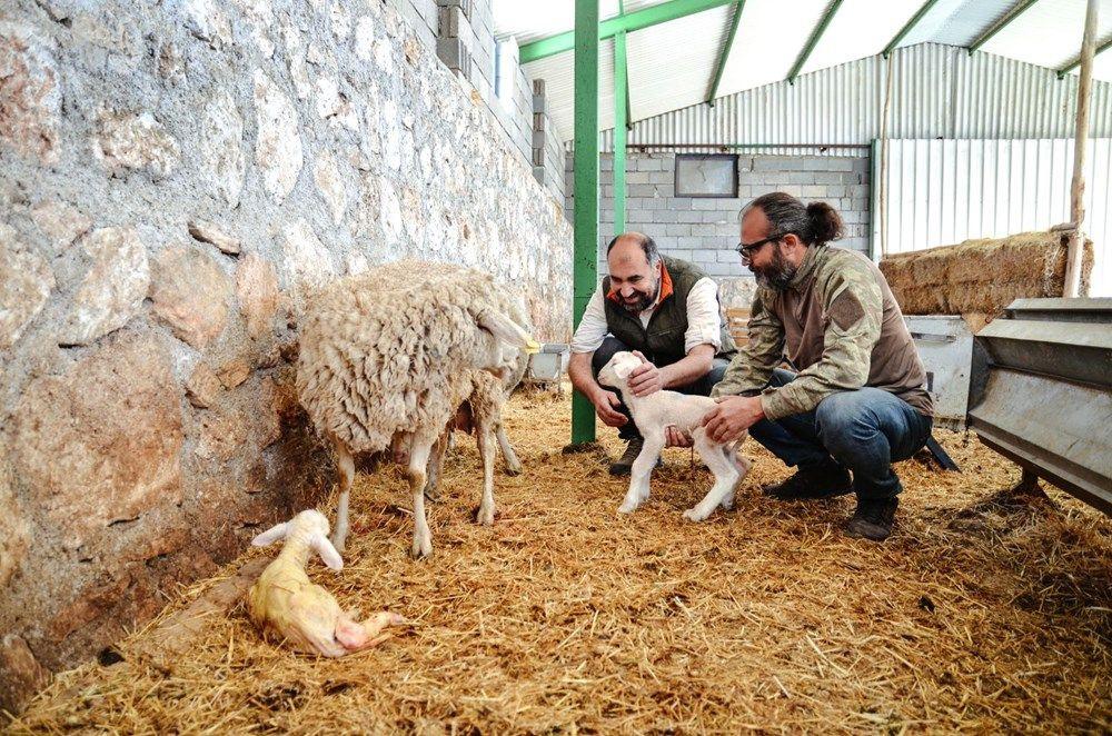 Kariyerlerini bırakıp kurdukları çiftlikte 800 hayvanlı sürünün sahibi oldular - Sayfa 4