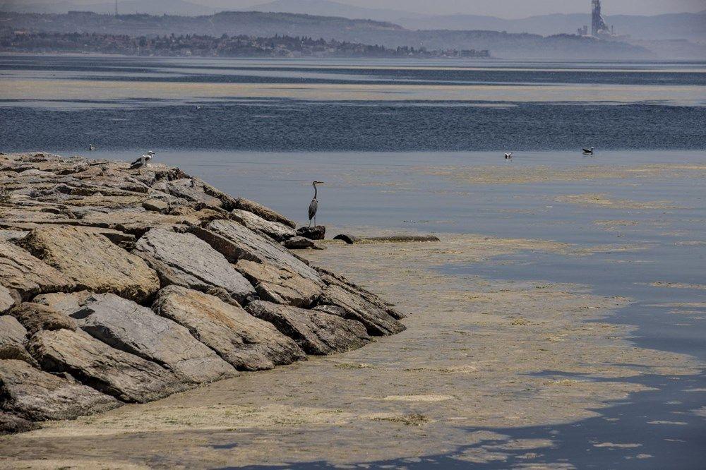 Marmara'da deniz salyası tehlikesi büyüyor - Sayfa 1