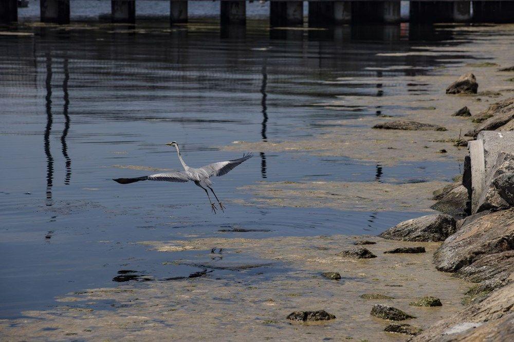 Marmara'da deniz salyası tehlikesi büyüyor - Sayfa 3