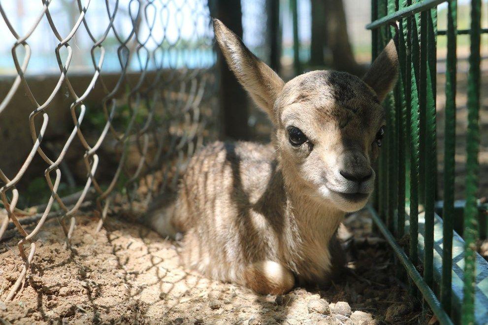 Baharla birlikte hayvanat bahçesi nüfusu artıyor - Sayfa 1