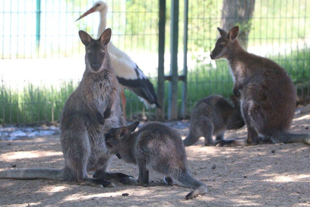 Baharla birlikte hayvanat bahçesi nüfusu artıyor - Sayfa 3