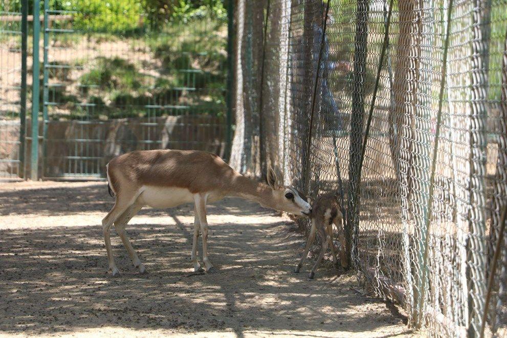 Baharla birlikte hayvanat bahçesi nüfusu artıyor - Sayfa 4