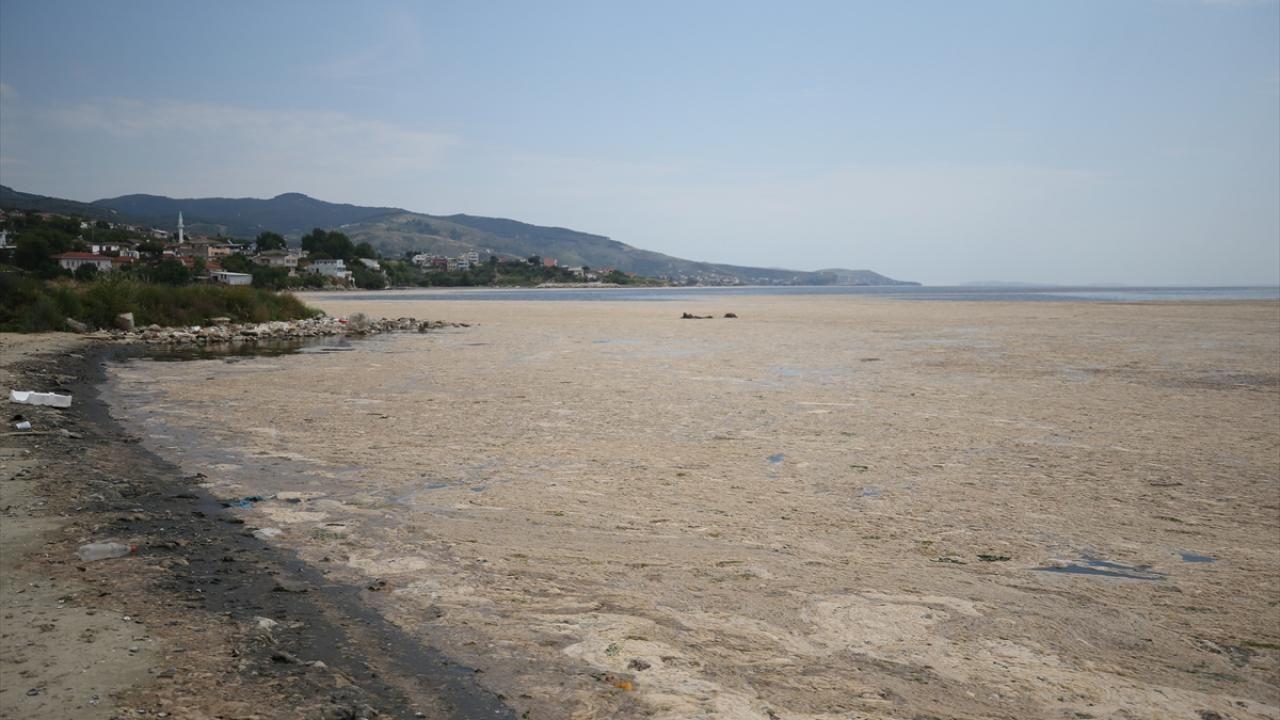 Erdek sahili müsilaja teslim: Deniz ve kara böyle bütünleşti - Sayfa 1