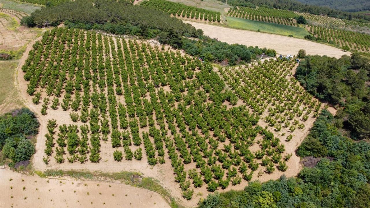 """Şeftali üreticisi kaliteyi artırmak için ağaçlarda """"tekleme"""" yapıyor - Sayfa 3"""