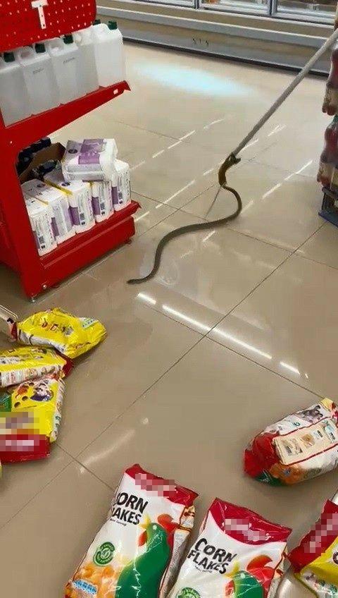 Alışveriş için gittikleri markette rafların arasından yılan çıktı - Sayfa 4