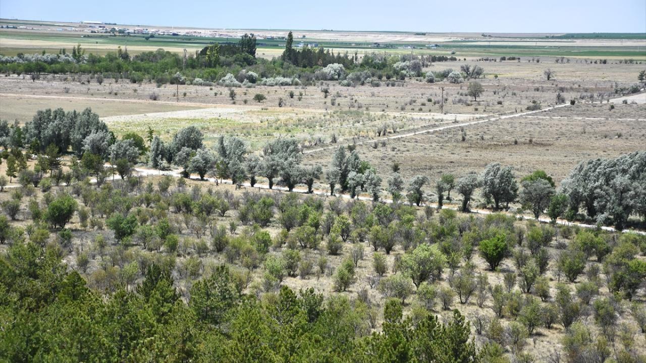 Dünyada ilk örnek: Yeşeren çöl Karapınar - Sayfa 2