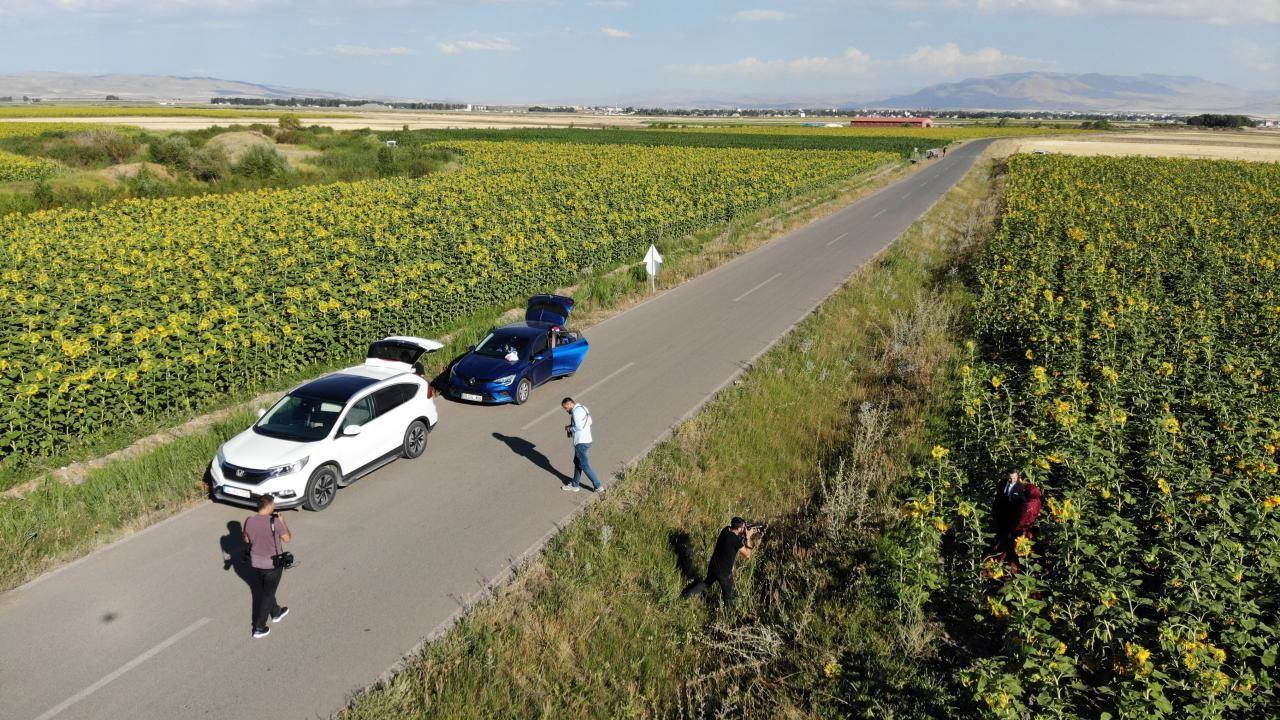Ağrı'daki ayçiçeği tarlaları fotoğrafçılar için vazgeçilmez oldu - Sayfa 1