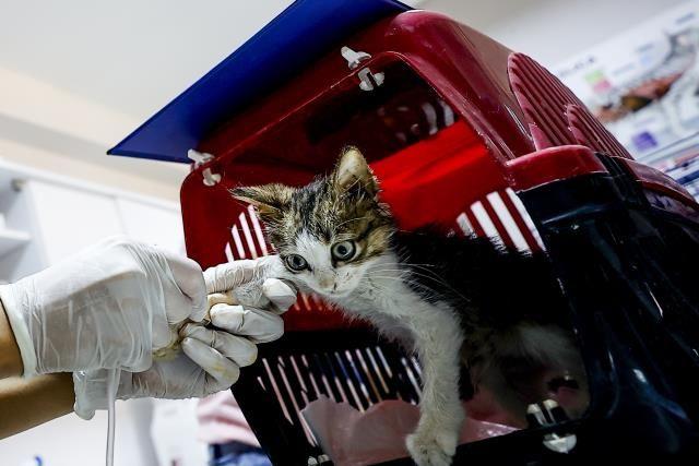 Gönüllü veterinerler yangınlarda yaralanan hayvanlar için seferber oldu - Sayfa 3