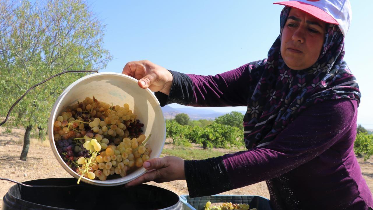 Dimrit üzümünün pekmezi damakları tatlandırıyor - Sayfa 2