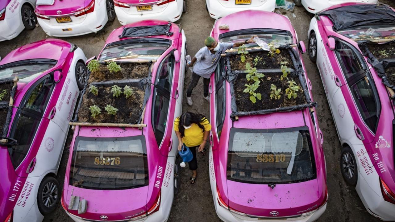 Parka çekilen taksiler bahçe oldu - Sayfa 1