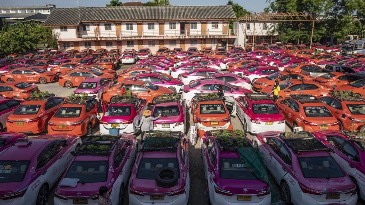 Kullanılmayan taksiler sebze bahçesine dönüştürüldü - Sayfa 1