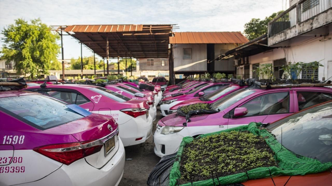 Kullanılmayan taksiler sebze bahçesine dönüştürüldü - Sayfa 3