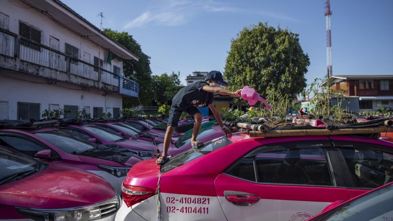 Kullanılmayan taksiler sebze bahçesine dönüştürüldü - Sayfa 4