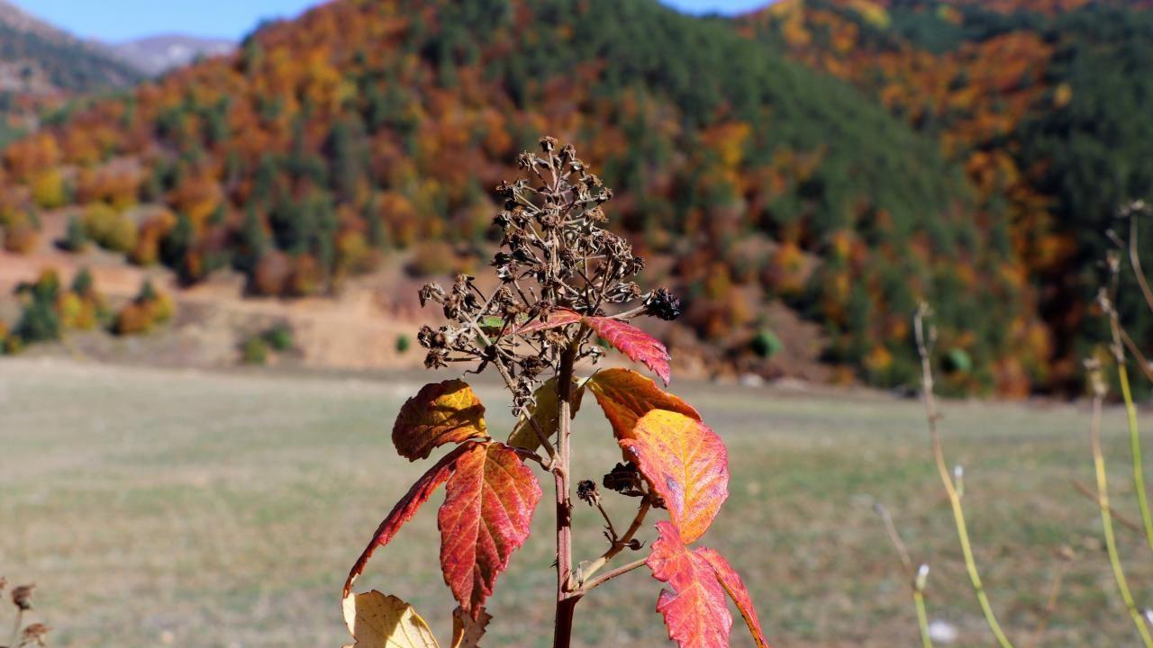 Dipsizgöl sonbahar güzelliği ile görenleri mest ediyor - Sayfa 4