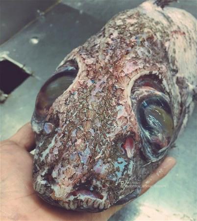 Sıradan bir balık sandı ama... - Sayfa 1