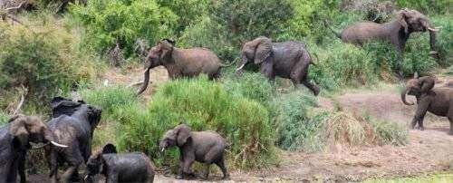 Timsah fili yakaladı ve... - Sayfa 4