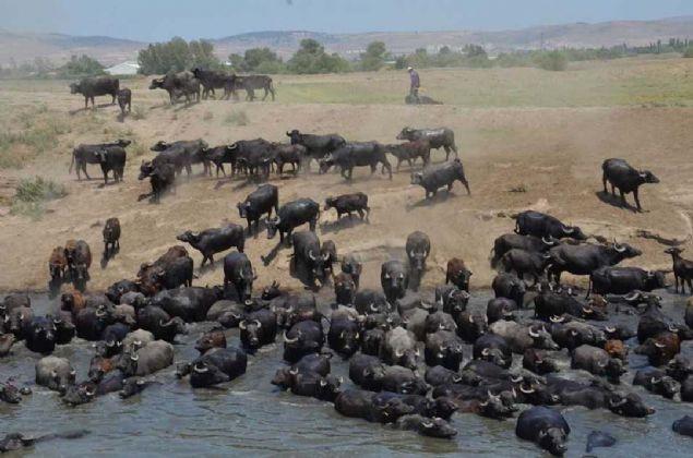 Burası Afrika değil Türkiye! Belgeselleri aratmayan görüntüler... - Sayfa 1