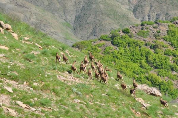 Munzur Dağı'nın zirvesinde Bezuvar dağ keçileri - Sayfa 2