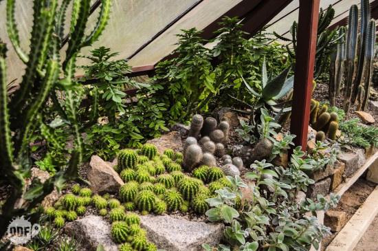 Dünya üzerindeki en iyi botanik bahçeler - Sayfa 2