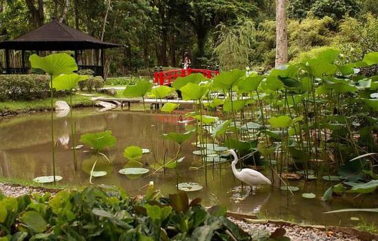 Dünya üzerindeki en iyi botanik bahçeler - Sayfa 3