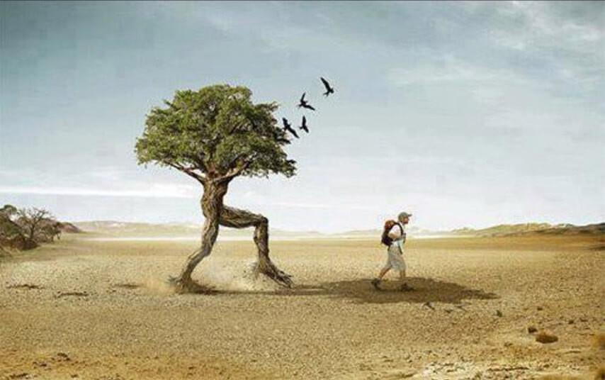 """Görenler film seti sanıyor! """"Yürüyen ağaçlar"""" - Sayfa 4"""