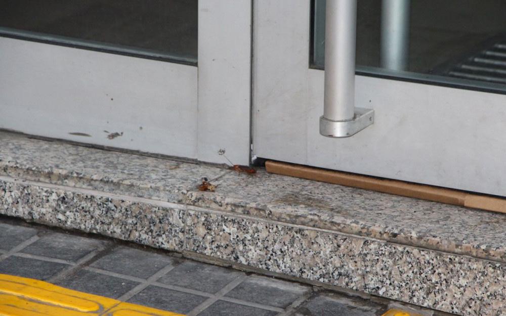 Trabzon'un en işlek caddesinde tehlike saçan böcek istilası Vatandaş neye uğradığını şaşırdı - Sayfa 2