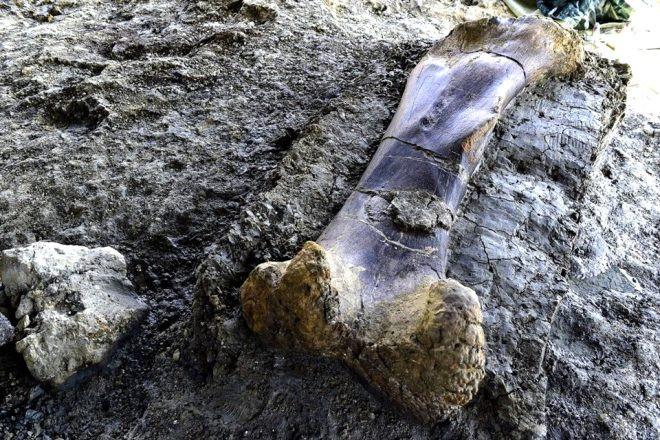 140 milyon yıllık keşif! 500 kiloluk kemik şoke etti - Sayfa 1