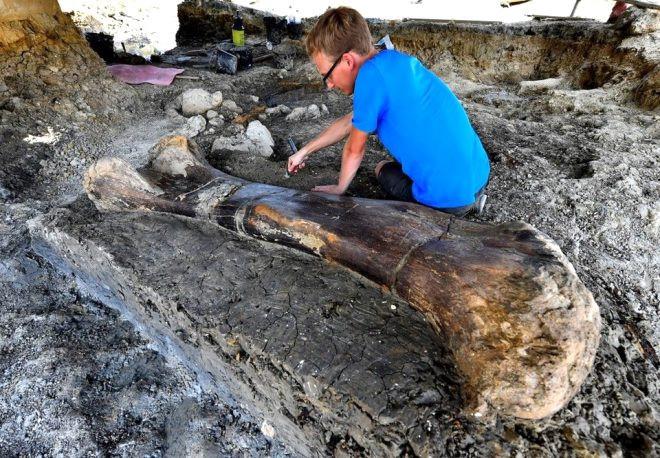 140 milyon yıllık keşif! 500 kiloluk kemik şoke etti - Sayfa 2
