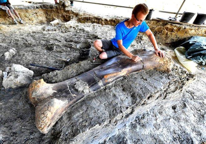 140 milyon yıllık keşif! 500 kiloluk kemik şoke etti - Sayfa 3
