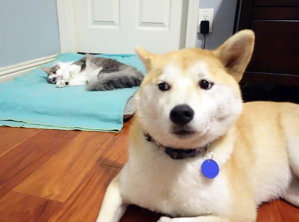 Köpeklerin yerini işgal eden sevimli kediler - Sayfa 1
