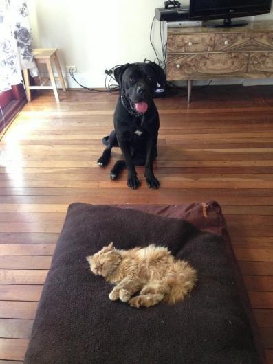 Köpeklerin yerini işgal eden sevimli kediler - Sayfa 3