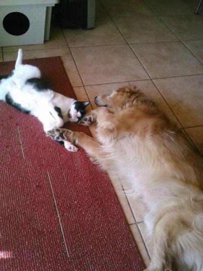Köpeklerin yerini işgal eden sevimli kediler - Sayfa 4