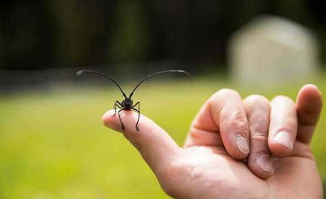 Görürseniz uzak durun! Dünyanın en ölümcül canlıları - Sayfa 1