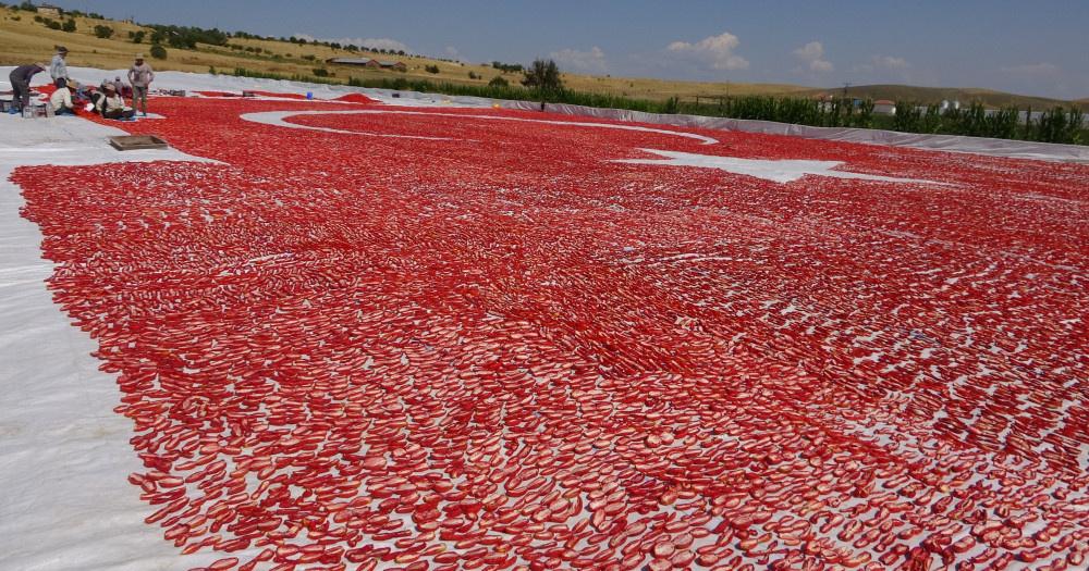 Elazığ'da domateslerden ay yıldız oluşturuldu - Sayfa 3