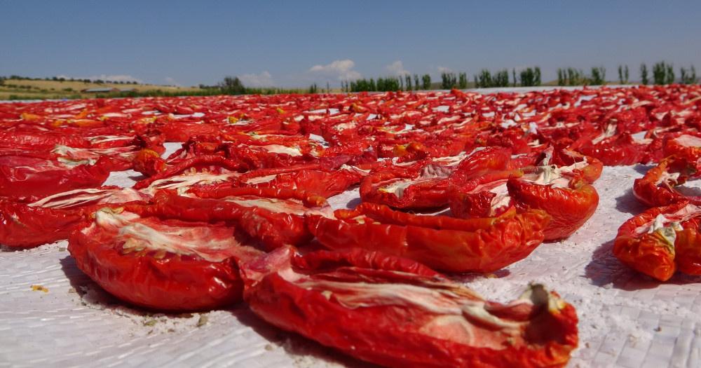 Elazığ'da domateslerden ay yıldız oluşturuldu - Sayfa 4