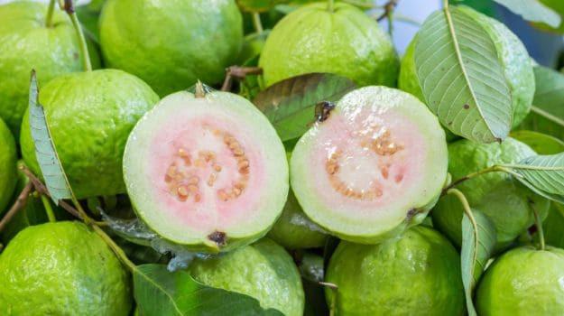 Silifke'de 'guava' hasadı başladı - Sayfa 2